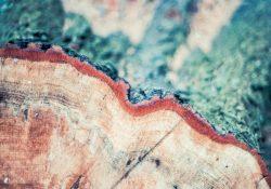 Hav styr på stubfræsning og træfældning