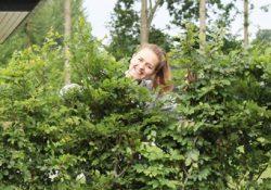 Flot afskærmning af din have med en grøn færdighæk